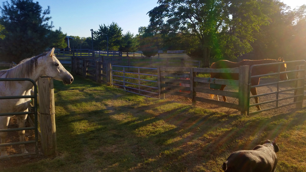 Horse Boarding Facilities Sunrise Stables Amp Riding
